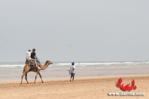 Camel trekking in Essaouira beach Morocco