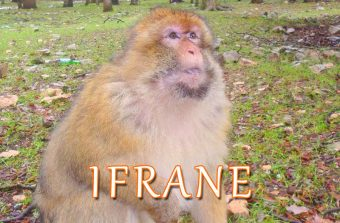 Macacos na Floresta do Parque Nacional de Ifrane Montanhas do Atlas Marrocos